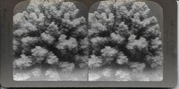 S0587 - Américan Stéréoscopic Company - Corail - Stereoscopio