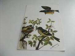 UCCELLI BIRD NIDO ILLUSTRATORE PIERO MARCIANO - Uccelli