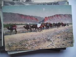 Africa Afrique Ou ? Caravane De Nomades - Alger