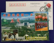 Japanese Apple Planting Specialist,Red Fuji Variety,CN 02 Shangge Town Apple Planting First Town In Middle China PSC - Fruits