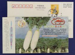 China 2000 Datian Off-season Vegetable Red Radish Postal Stationery Card - Vegetables