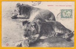 1906 - Carte Postale De Djibouti, C. F. Des Somalis Vers Dole, Jura - Cad Arrivée - Vue : Lions D' Abyssinie Apprivoisés - Lettres & Documents