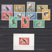 Yemen 1966,11V+Block,birds,vogels,vögel,oiseaux,pajaros,uccelli,aves,MH/Ongebruikt (A3289) - Vogels