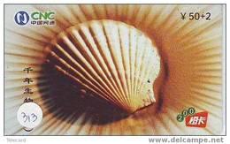 Schelpen - Seashells – Conchiglia – Sea Shell –  Coquille – Muschel – Seashell – Mus - Vissen