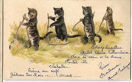 Chats   Menu Princier Pour Noble Damoselle   CPA 1902 - Gatos