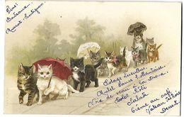 Chats   Menu Princier Pour Noble  Messire  CPA 1902 - Gatos