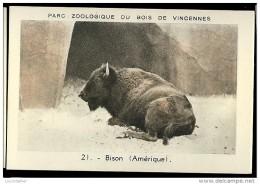 BISON N°21 Parc Zoologique Du Bois De Vincennes - Animaux