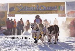 Yukon Quest Dog Sled Race, Whitehorse, YUKON, YK, CA, CANADA, CANADIAN POSTCARD POST CARD, Carte Postale - Yukon