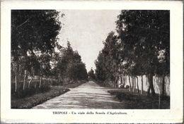 TRIPOLI UNA VISTA DELLA SCUOLA D'AGRICOLTURA STAMPA CIRCA 1912 LIBIA OCC. ITALIANA - Libië