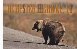 GRIZZLY BEAR, Dempster Highway, YUKON, YK, CA, CANADA, CANADIAN POSTCARD POST CARD, Carte Postale - Yukon