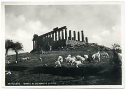R.423.  GIRGENTI - AGRIGENTO -  Tempio Di Giunone E Lacinia - Gregge - Pecoraio - Agrigento