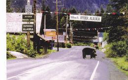 Black Bears In HYDER, ALASKA, AK, United States, USA, POSTCARD POST CARD, Carte Postale - United States