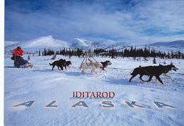IDITAROD Dog Sled Race, ALASKA, AK, United States, USA, POSTCARD POST CARD, Carte Postale - United States