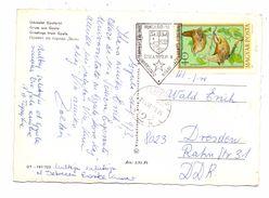 ESPERANTO - Sonderstempel GYULA 1983 - Esperanto