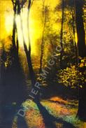 """"""" Forêt """"  Didier Mignot - Autres"""