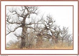 Burkina Faso - Baobabs - Burkina Faso