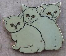 TROIS CHATON GRIS- BEIGE -  CHAT - CAT -                  (JAUNE) - Tiere