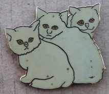 TROIS CHATON GRIS- BEIGE -  CHAT - CAT -                  (JAUNE) - Animales