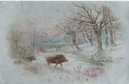 Everzwijn Sanglier - Tierwelt & Fauna