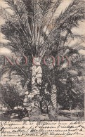 Egypte Egypt - Palmier - Egypte