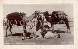 Egypte Egypt - Group Of Camels In The Desert - Chameaux Désert - Egypte