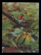 *Parrots - Les Perruches* Postal 3D. Ed. Studio AG Nº 303, Zurich. Nueva. - Estereoscópicas