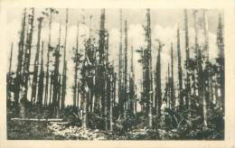 La Grande Pitié Des Forêts D'Ardenne - Belgique