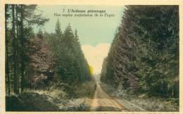 L'Ardenne Pittoresque - Nos Sapins Majestueux De La Fagne - Belgique