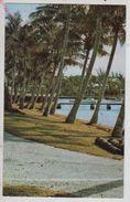 Cpm St002857 Coconuts Palms Flatts Bermuda - Bermudes