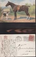12650)  TUCK'S OILETTE 9561 MAN'S BEST FRIEND HORSE CAVALLO FAVOURITES VIAGGIATA 1913 - Tuck, Raphael