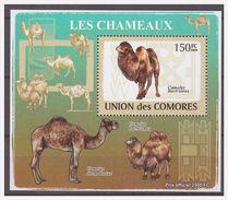 0243 Comores 2009 Kameel Camel Chameaux S/S MNH - Timbres