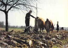 AGRICULTURE Attelages - SCENE DE LABOUR : Attelage De Boeufs En LIMOUSIN - CPSM Grand Format - - Attelages
