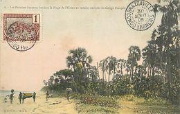 A-17.6911 :  CONGO FRANCAIS  LES PALMIERS BORASSUS - Congo Français - Autres