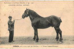 CPA N°998 - FRANCE CHEVALINE N°99 - 1911 - INDIEN, NOIR NE EN 1908, PAR ECHANSON - Ier PRIME ETALONS NIVERNAIS - Paardensport