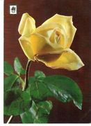 POSTAL     UNA ROSA  -SERIE 1 Nº 85   COLECCION DE FLORES - Flores
