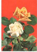POSTAL      DOS ROSAS - Flores