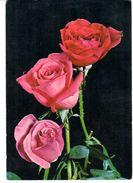 POSTAL     TRES ROSAS - Flores