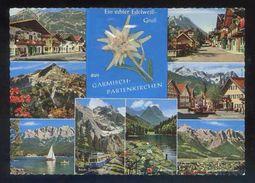 Postal Con Flor Edelweiss. Ed. Bücheler Karte. Nueva. - Flores, Plantas & Arboles