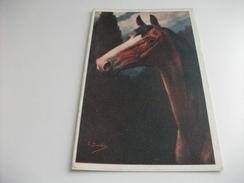 CAVALLO HORSE CAVALLO TESTA IN PRIMO PIANO ILLUSTRATORE BURTON - Chevaux
