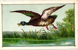 12 Litho Chromos, Proof Prints NO PUB C1885 -12cmX7,5cm Fazant, Patrijs, Eenden Canards, Roodborstje, Ijsvogel, Papegaai - Animaux