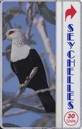 TARJETA DE SEYCHELLES DE UNA PALOMA (BIRD-PAJARO) NUEVA-MINT - Seychelles