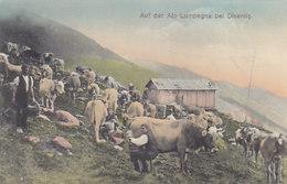 Auf Der Alp Lumpegna Bei Disentis - Superanimation (beim Melken) - Top      (P-60-50120) - GR Grisons