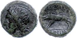 Akragas, Phintias, Tyrant, Æ (7,73g), 287-279 V. Chr., Av: Apollokopf Nach Links, Rev: Wildschwein Nach... - Antique