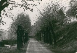 BONNY SUR LOIRE Promenade De La Chenille - 1957 - Autres Communes