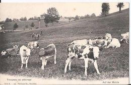 CPA - Suisse - Troupeau Au Paturage - Vache - Auf Der Weide - Suisse