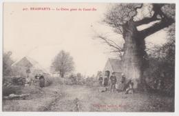 26255 BRASPARTS  (29) Chene Geant Du Castel-du - Arbre Remarquable Bretonne   -Ed Joncour N° 407 - - Non Classés