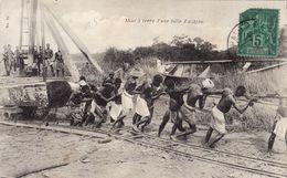 Mise à La Terre D'une Bille D'acajou - Ivory Coast
