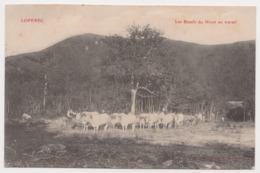 26258  LOPEREC Les Boeufs Du Nivot Au Travail   -Ed Joncour N° ? Brasparts - Cow Bovin - Autres Communes
