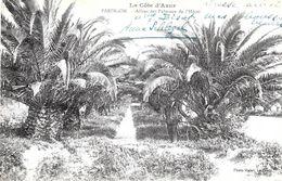 Cavalaire-sur-Mer. L'allée Des Palmiers Au Grand Hotel De Pardigon. - Cavalaire-sur-Mer
