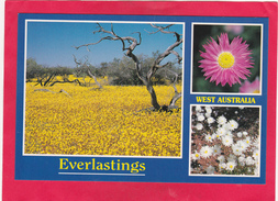 Modern Post Card Of West Australia ,B25. - Australia